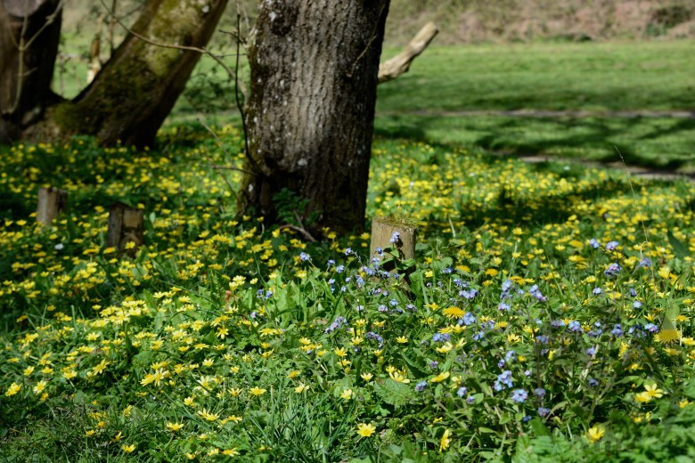 Springtime in Porthkerry Country Park, Barry