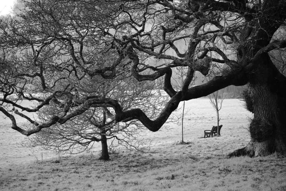 Black and white photos for sale