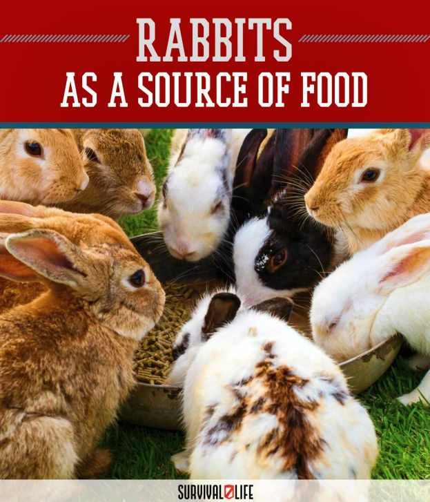 Placard | Rabbits: Sustainable Food Source