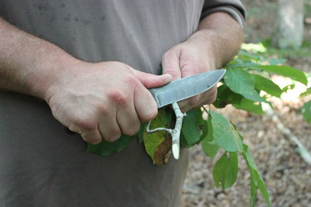 Cutting plant using knife | Obscure Bushcraft Skills For Survival