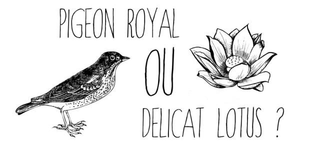 pigeon royal ou lotus