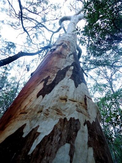 Burbank Forest Reserve QLD | Pavlova