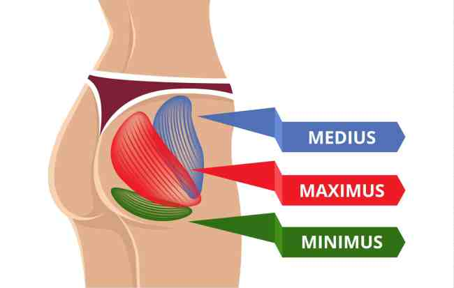 Image of the different muscles in the glutes: medius, maximus, and minimus