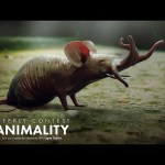 Animality Contest – Waleed Abid | CreativeStation