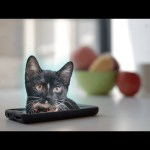Run! Cats are escaping from the Internet