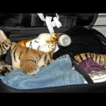 10 Craziest Things Found By Airport Security