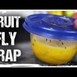 "How To Make a ""Lemon Fresh"" Fruit Fly Trap"
