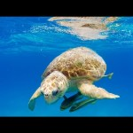 GoPro: 3D Sea Turtle with Andy Casagrande in 2.7K