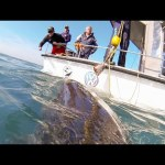GoPro: If I Was A Great White Shark