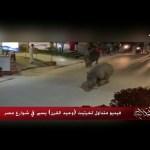 #الحكاية  حقيقة فيديو متداول لخرتيت (وحيد القرن) يسير في شوارع مصر