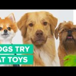 Dogs Try Cat Toys for the First Time