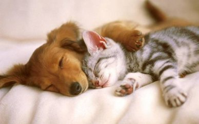 Image result for dog and cat