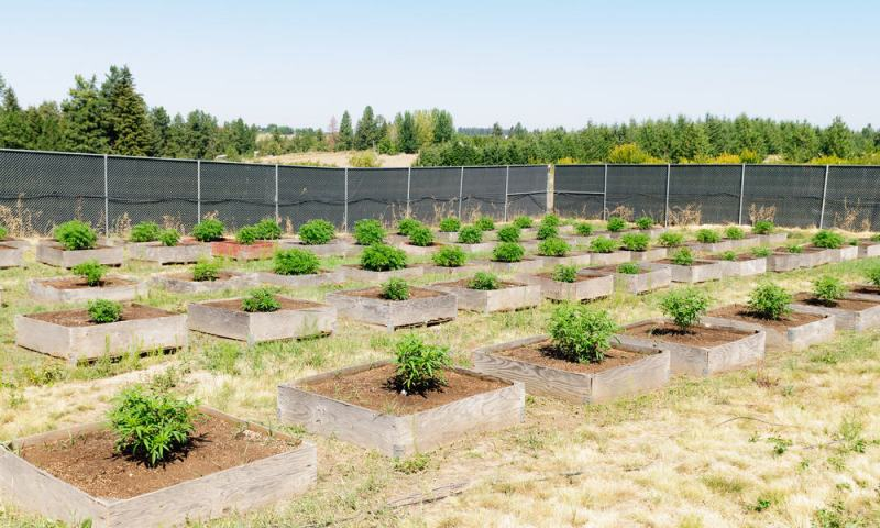 Does Marijuana Farming Hurt The Environment?