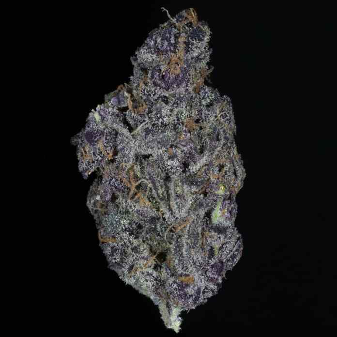 The Winners of the 2019 Michigan Cannabis Cup