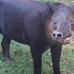 Венесуела, звір із зоопарку