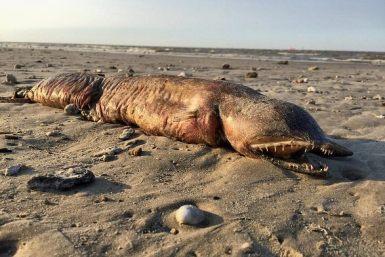 Ураган викинув на берег невідому істоту