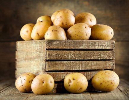 Картопля на насіння