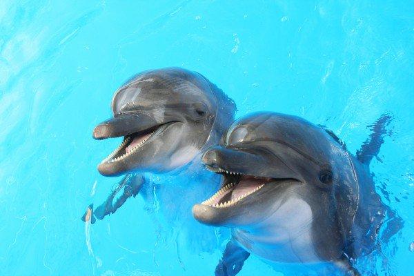 Бойові дельфіни відмовилися служити російським окупантам