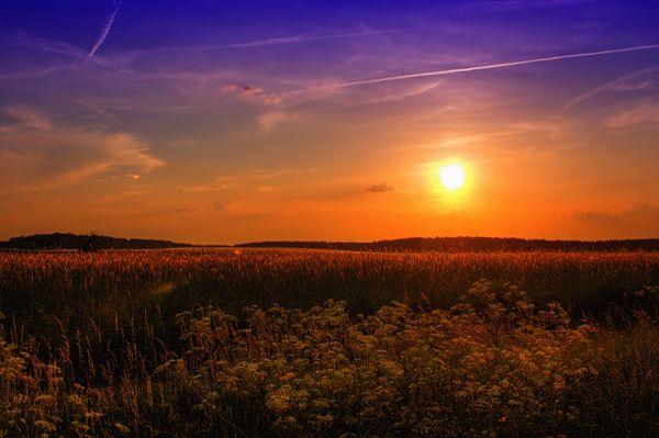 Погода на тиждень: на півдні і сході України до +37°