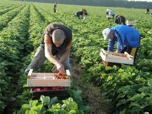 Польща масово втрачає робітників з України
