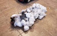 У США ветеринари оживили замерзлу кішку