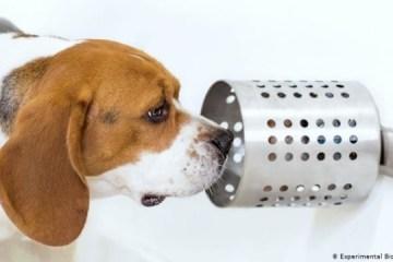 Собака діагностує рак легенів