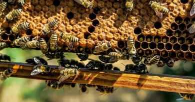 Бджоли вже будують гнізда з пластикових відходів