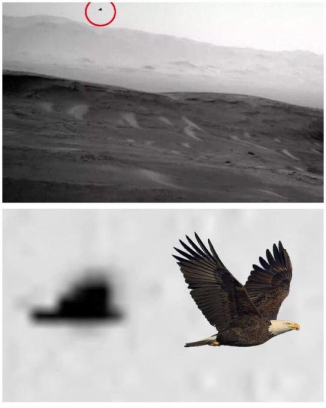 Марсохід сфотографував птаха