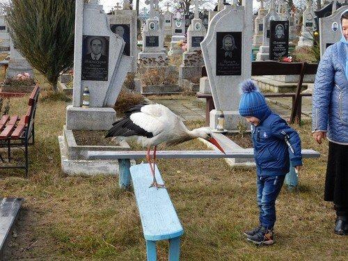 Лелека на цвинтарі