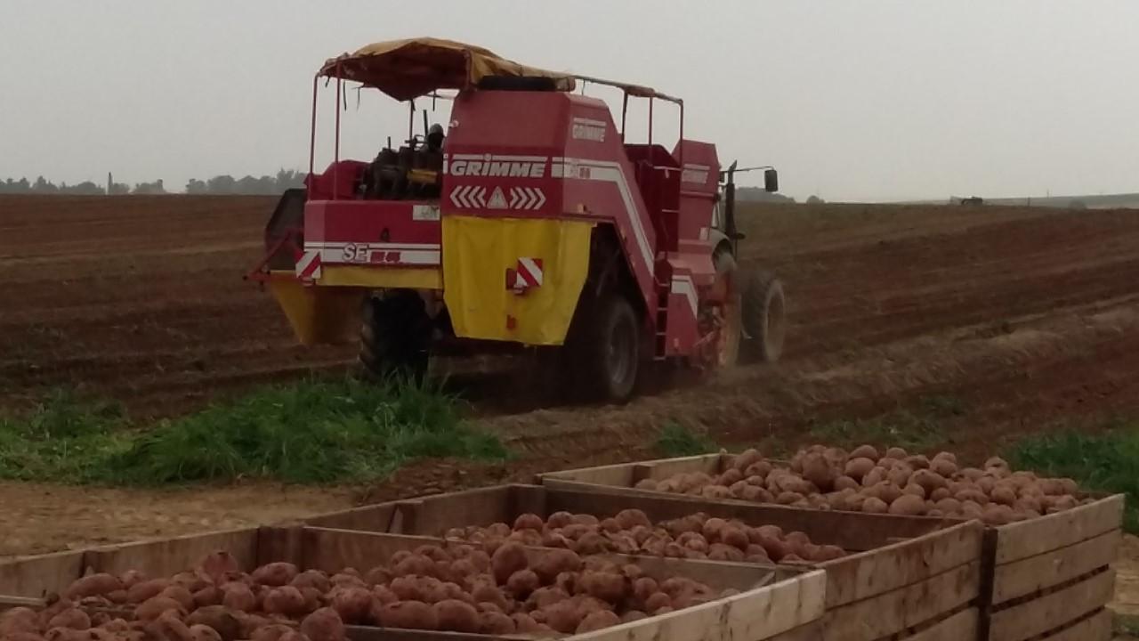 3 Point Potatoes Aardappelen Import