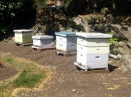 Victoria Resident Bees