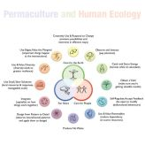 Permaculture and Human Ecology