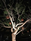 A tree in the middle of the outdoor dining at Tazuna