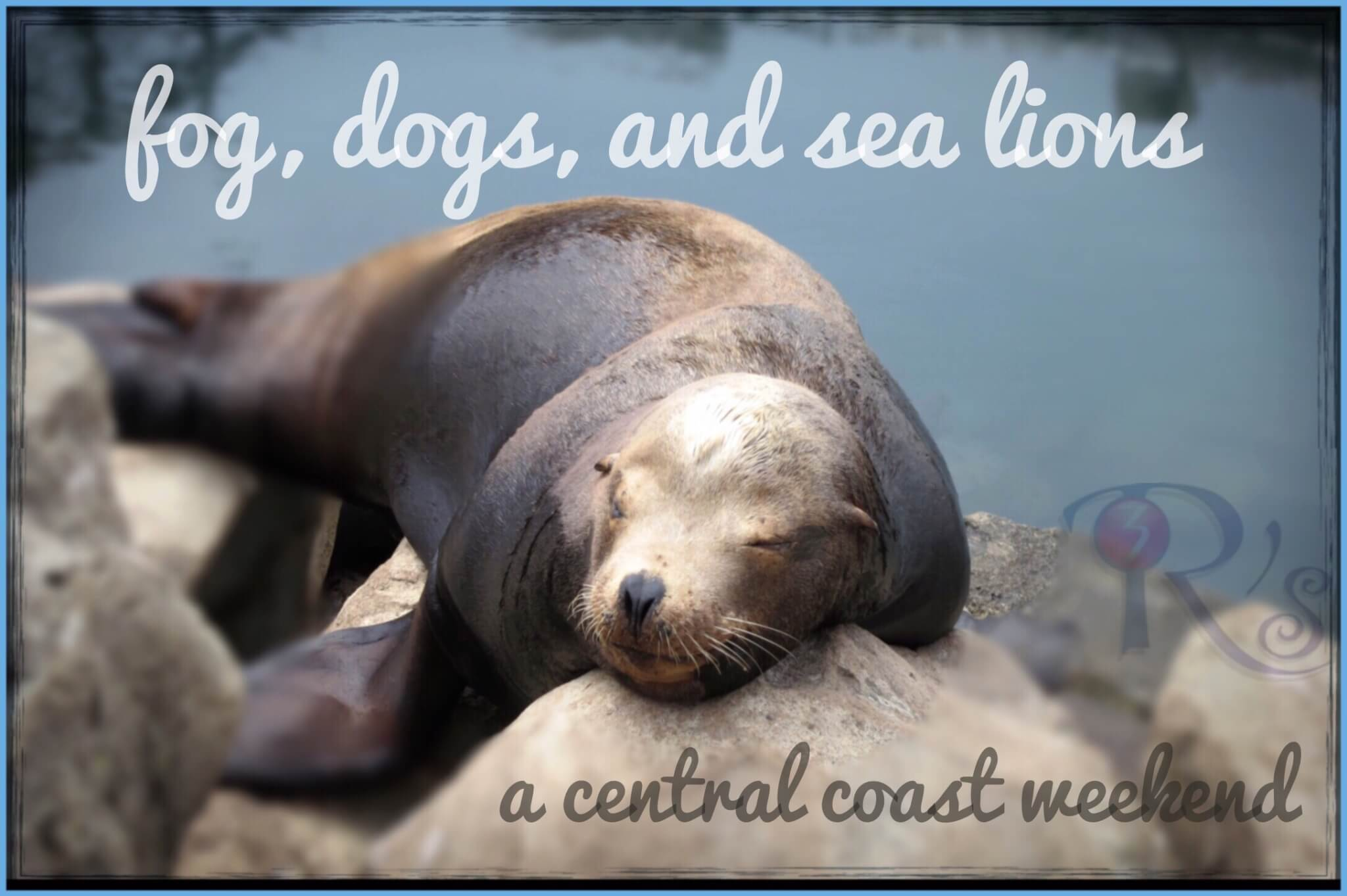 Fog, Dogs, and Sea Lions: A Central Coast Weekend