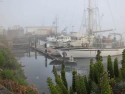 June Gloom-y harbor