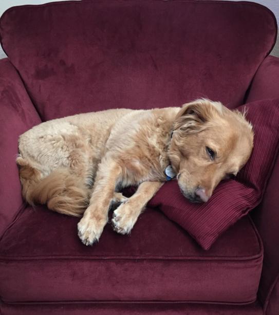 snoozy dog