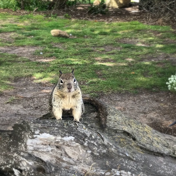 5 random things and a squirrel