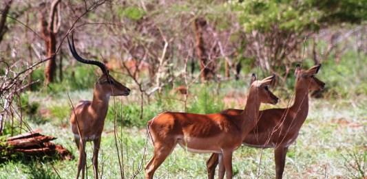 محمية أكاغيرا الرواندية.. الوجهة الأولى لعشاق الحياة البرية