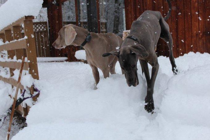 Snow Day: 3ten.ca