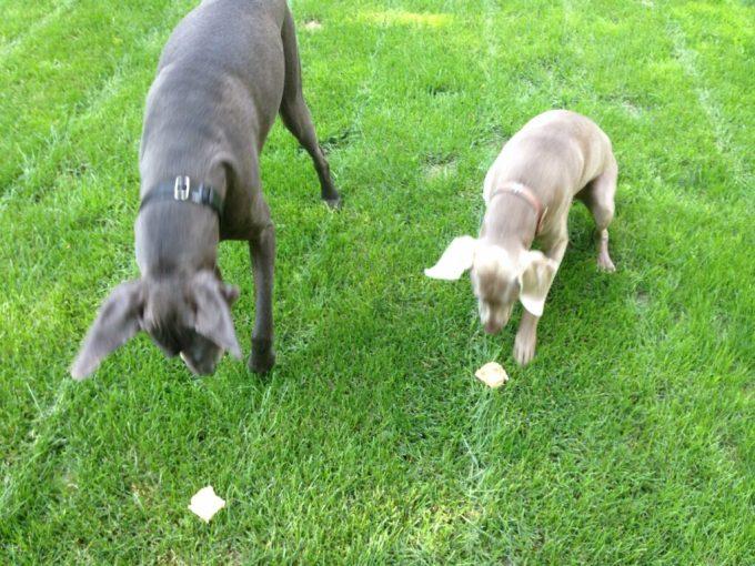 Frozen Dog Treats: 3ten.ca