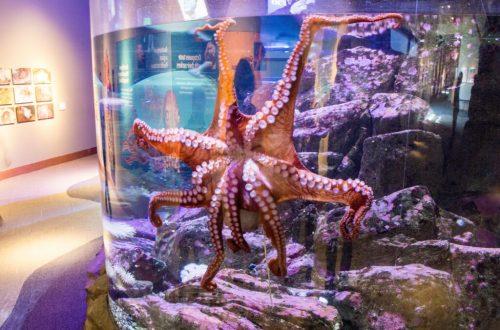 Seattle Aquarium: 3ten.ca