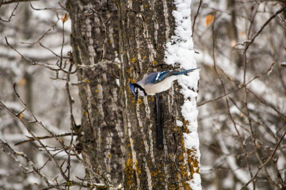 Blue Jays: 3ten.ca