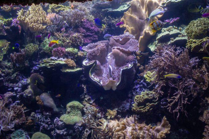 Shedd Aquarium: 3ten.ca