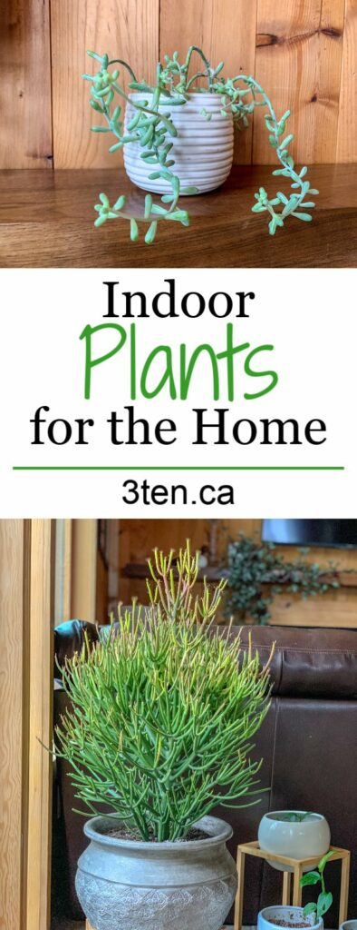 Plants: 3ten.ca