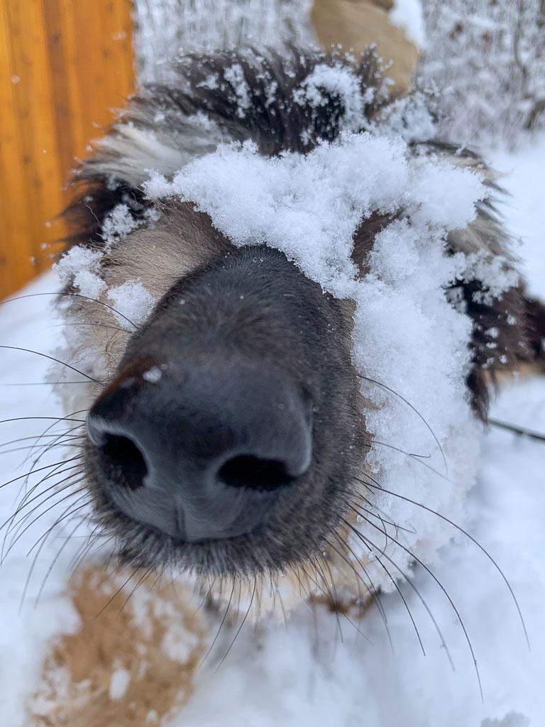 Loving the Snow: 3ten.ca