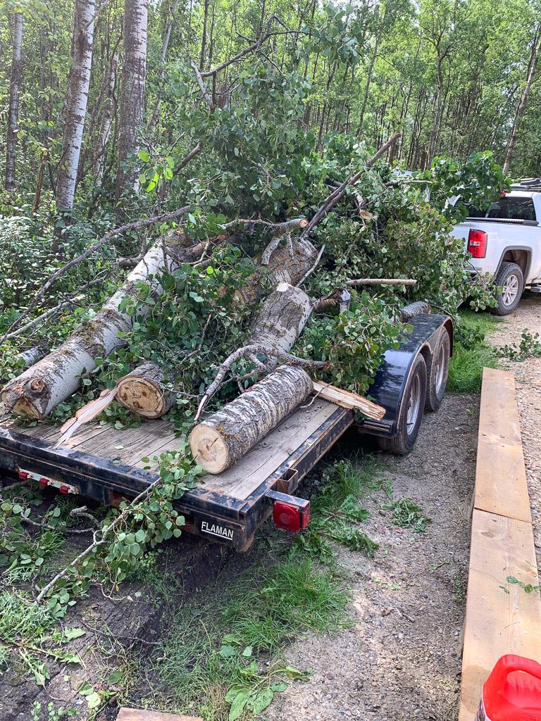 Tree Cutting 2019: 3ten.ca