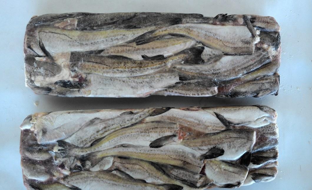 fish in ice block