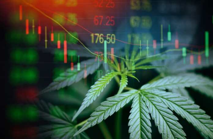 cannabis stock equity option employee officer
