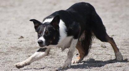 Strandängens Flynn