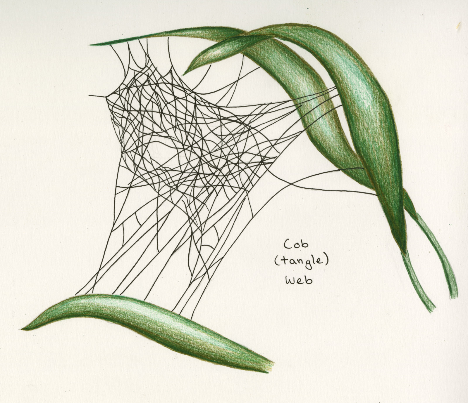 Spider Webs Come As Many Different Types Bay Nature